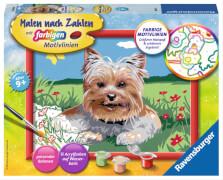 Ravensburger 283255 Malen nach Zahlen: Kleiner Yorkshire Terrier, Malset