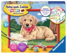 Ravensburger 283439 Malen nach Zahlen: Süßer Labrador