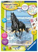 Ravensburger 28565 Malen nach Zahlen: Pferd am Strand