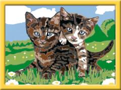 Ravensburger 278367 Malen nach Zahlen: Verspielte Kätzchen, Malset